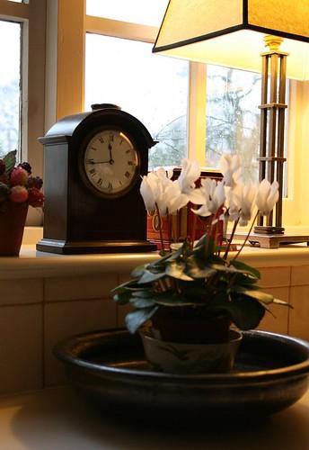 cyclamen, warm light, grey day