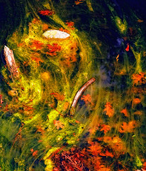 Painterly rendering of a photo of a water pond (William Yu Photography / Chinaphotoworkshop) Tags: california park usa lake color nature water pool beauty leaves rock river painting moss pond stream branch calm national yosemite     chinaphotoworkshop