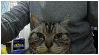 うちの猫、中々眼力のあるな・・・