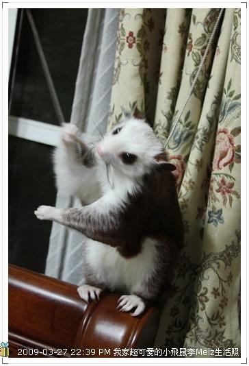 09年二三月小飛鼠Meiz生活照 (36)