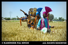 Visakhi (Raminder Pal Singh) Tags: india men canon energy village wheat performing culture sing perform turban tradition punjab celebrate folkdance amritsar afc bhangra decorated wheatfield villagelife attire vaisakhi baisakhi virsa energetic dhol visakhi wheatfarm canon1d dholi raminder jatt mendancing dancingmen folkartists punjabivirsa traditionalattire raminderpalsingh punjabiculture nachdapunjab boliyan punjabiyat shotoncanon menperformingfolkdancebhangra bhangraimage bhangrainafarm celebratingvisakhi celebratingbaisakhi dholtedagga kukkadanwala richculture