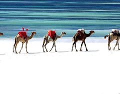 Kamele am Diani Beach