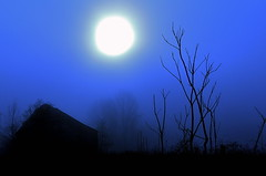 Barn On Cari Road (Baab1) Tags: halloween fog dawn shadows decay blues maryland oldbarns blacks deadtrees southernmaryland calvertcountymaryland totalphoto aplusphoto astoundingimage huntingtownmaryland mostbeautifulpicturembpictures