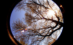 Forward Thinking (stacymagallon) Tags: sun tree leaves lens stacy branches fisheye thinking flare upward positivity magallon