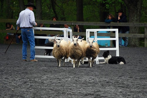 The Sheep Dog Trials - MD S&W 2009