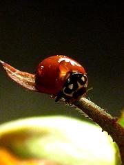 负重 (Juliet Yu) Tags: waterdrop micro 花 仙人掌 叶子 微距 水滴 蜘蛛网