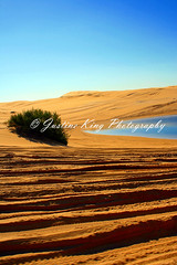 Dune driving (Justine King) Tags: beach sand driving dune 4wd colorphotoaward