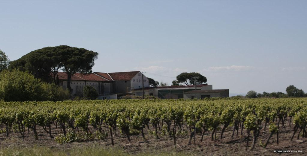 Os maiores vinhedos encontram-se na Camarga