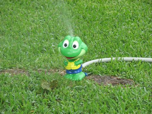 The frog sprinkler