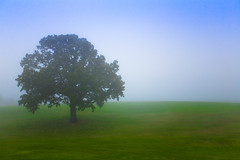 Imagination Through The Fog (Loren Zemlicka) Tags: blue sky mist tree green nature field grass leaves fog wisconsin rural canon landscape photography photo oak midwest image branches country hill picture meadow trunk 5d canonef1740mmf4lusm lonetree fitchburg canoneos5d flickrexplore flickrfrontpage portalwisconsinorgselected lorenzemlicka portalwisconsinorg062609