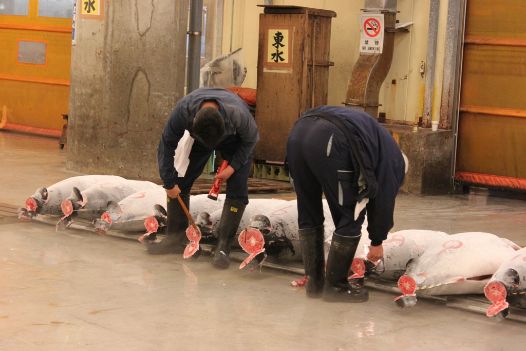 Tsukiji- Tuna Auction Observation Trip