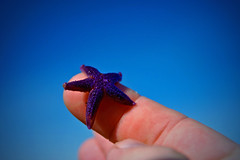 Sjöstjärna Starfish (Johan Runegrund) Tags: