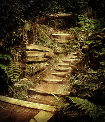 Muir Woods - steps (CowGummy) Tags: sanfrancisco sun colour nature fairytale forest woodland landscape photography fantastic woods dream muirwoods rays process dreamlike sunrays escapism canon400d cowgummy stevenmeyerrassow