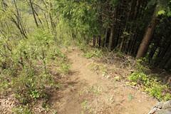 高柄山から千足峠への下り道