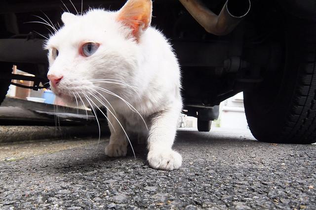 Today's Cat@2011-06-03