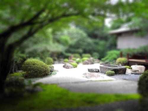 A Japanese garden 2