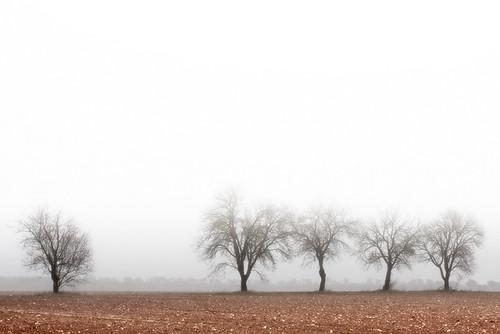 Niebla levantándose