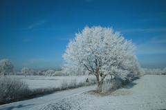 Drostendijk - Rijssen (Netherlands) (Meteorry) Tags: blue trees winter sky white holland netherlands landscape europe hiver nederland bleu ciel arbres blanche paysage 2008 paysbas blanc overijssel holten meteorry rijssen drostendijk