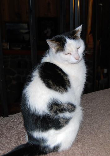 6 - Granddad's Cat