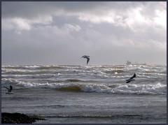 Stormy (andersonjean70) Tags: ayrshire stevenston supershot oceanshore abigfave onlythebestare vosplusbellesphotos flickrcinated