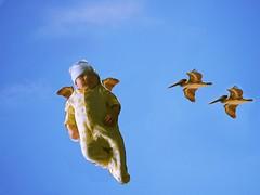 angel - baby wren learning to fly and pelicans (octopus minor) Tags: sky bird art angel digital photoshop painting fly flying mixed media gimp pelican superman cielo cherub alcatraz wren angelo cupid wacom corel pelicano volare volar superbaby ornthology