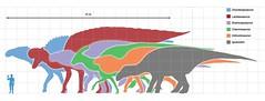 Largest ornithopods