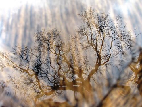Vanity tree