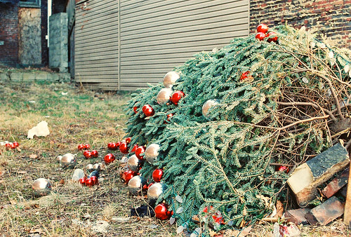 Fallen Christmas Tree, East Ohio Street, Pittsburgh, PA