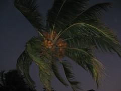 2009 coconutpalm getprints