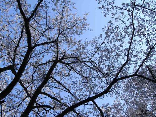 09-04-10【桜】@談山神社-05