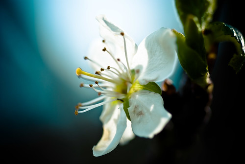 blossoms-10