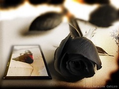 Black Rose...( Platinum ) (♫ Photography Janaina Oshiro ♫) Tags: naturaleza black flower macro nature rose digital natureza rosa japão soe abigfave nikond90 theunforgettablepictures