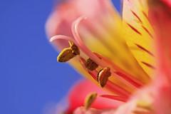 ~~Spring~Is In The Air~~ (mikenpo) Tags: blue flower macro canon bokeh karmapotd karmapotw mikenpo