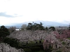 sakura 487 (some random neff) Tags: japan aomori sakura hirosaki