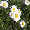 daisy test K02 f/11