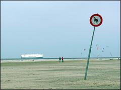 Hier (Yolande...) Tags: sea holland beach strand boot boat zee hond kitesurfing explore ijmuiden