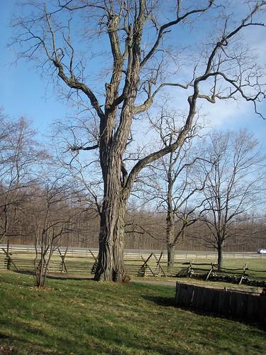 Alvin's Tree