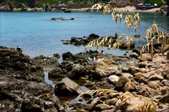 ramoscelli (Beppe Modica) Tags: sea italy nature italia mare sicily colori luce sicilia sizilien sicilie cefal lifetravel canoneos450ditalia