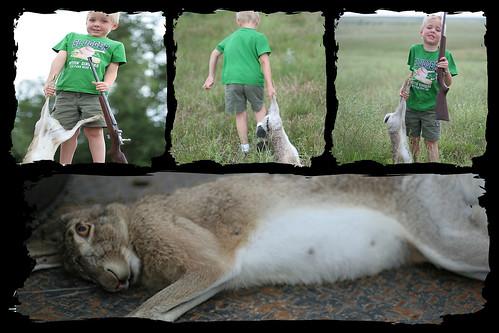 Preston rabbit collage
