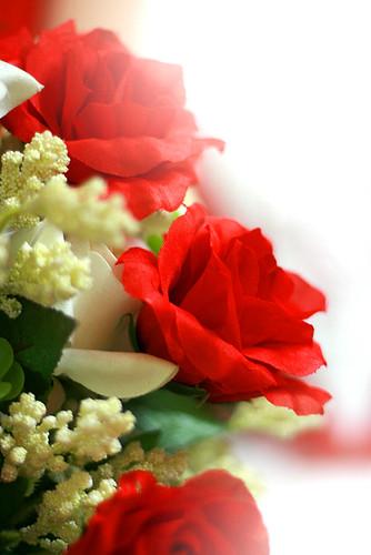 Buktinya mawar atau bunga