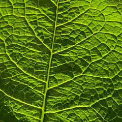 Leaf squared - 100.0 mm-Canon EOS 5D-100 mm-1-250 sec at f - 11 0 EV--ISO 800-IMG_9968.jpg (Andreas Helke) Tags: plant green nature canon germany square deutschland leaf coburg europa europe y edited natur pflanze 5d canon5d fav grün dslr blatt forestfloor colorfield quadrat fav2 waldboden ipp rosenau canoneos5d candreashelke worldsfavorite donothide fav2andmore canonef100mmf28lmacroisusm canon100lis old4starrating upload2010 lightroomtoflickrupload keepfromoldcatalog 2012upload canonportfolio