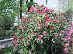 Blumen auf der Brissago-Insel