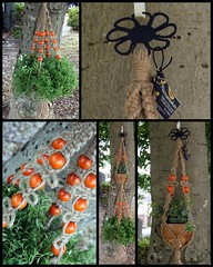 Macrame Hanging Basket- Summer Breeze (Macramaking- Natural Macrame Plant Hangers) Tags: wood orange plants brown tree green beauty metal hippies garden happy idea beads spring pretty fiesta basket natural bright herbs asheville handmade unique decorative character creative fluffy curls northcarolina funky double retro deck arab gift porch round shelby daisy 70s hanging balance flowing cheerful birthdaygift weavers groovy weddinggift knots sunroom swirly detailed christmasgift hangingbasket twisting blackmetal artscrafts jute containergardening macram veryspecial planthanger alternating orangeberries mothersdaygifts macramakin macramaking 5plyjute httpwwwetsycomshopmacramaking