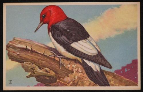 vintage birds 005
