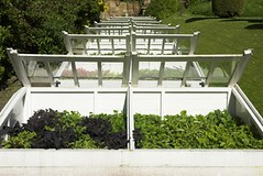 Commercial cold frame greenhouses