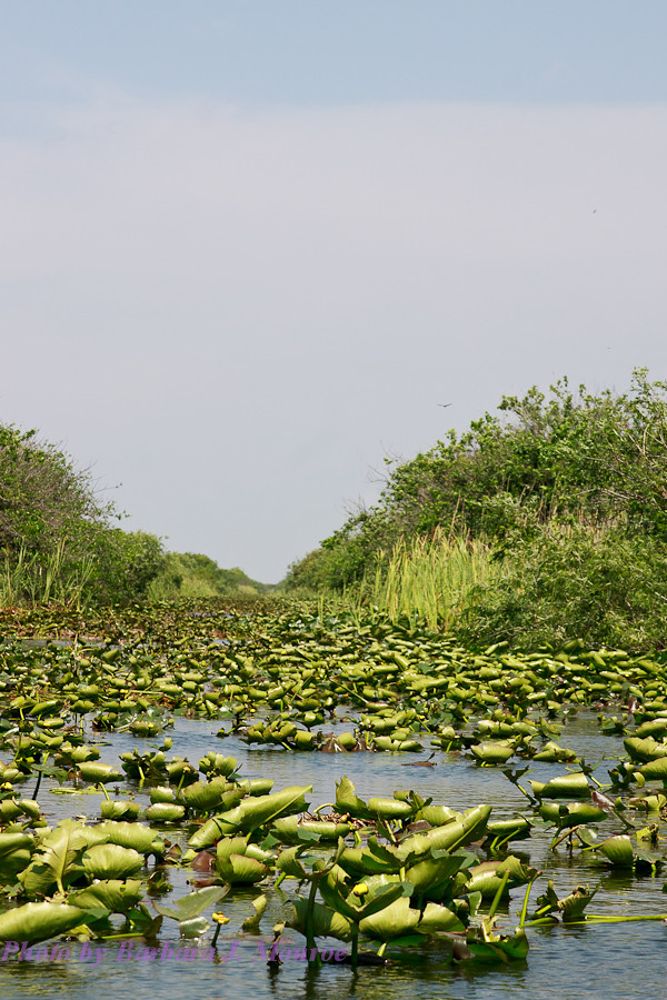 Everglades-Airboat Tour (2 of 16)