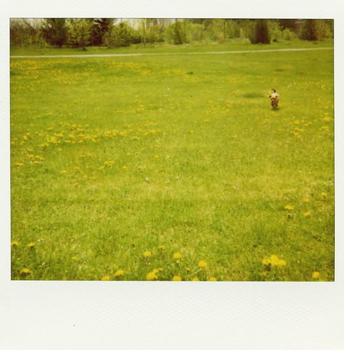dandelions + dog = Polaroid worthy