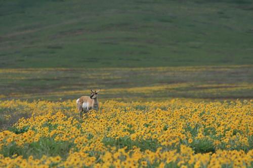 bison_range_20110522_470