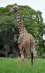 mysore zoo 11
