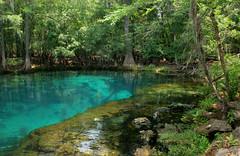 Blue Lagoon (WildAtHeartPhoto) Tags: blue trees tree nature water beautiful rock photography spring flora rocks crystal lagoon manatee clear springs ecgardner
